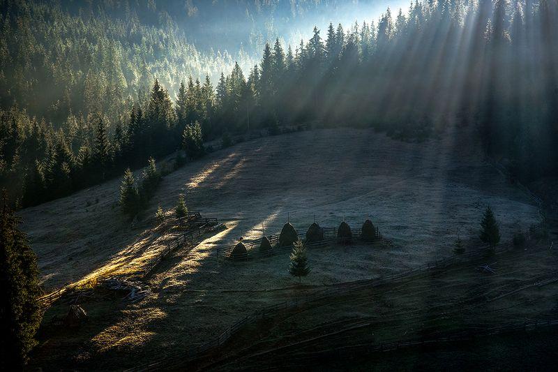 утро, лучи, лес, стога, апусены, горы, поляна, осень, Первый иней на травеphoto preview