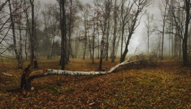 Вокруг упавшего дереваphoto preview