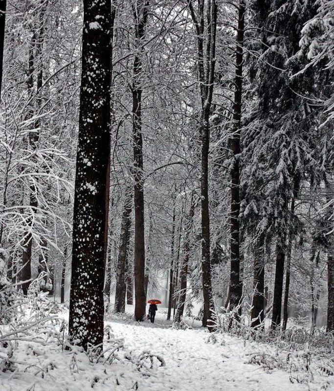 Про одинокий зонтик в зимнем лесу.photo preview