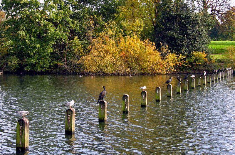 вакантные, места, река, птицы Есть вакантные местаphoto preview