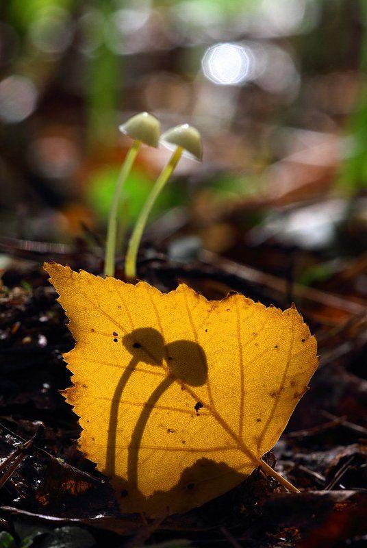 грибы, макропейзаж Лесной киносеансphoto preview