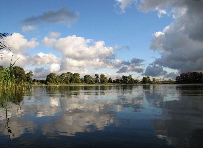 пруд, осень, небо, облака, отражения в воде, деревья, камышь. Зеркальное отражениеphoto preview