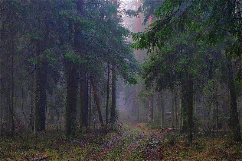 весна, май, дождь, лес После майского дождяphoto preview