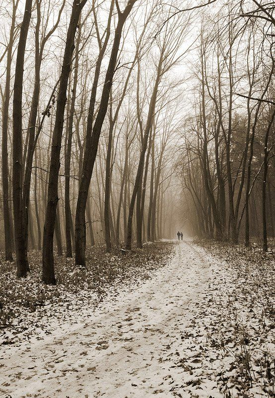 forest, vladikavkaz, жанр, сепия, перспектива \
