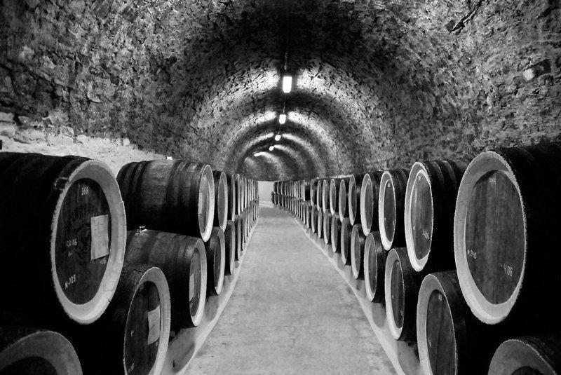 in, vino, veritas In vino veritasphoto preview