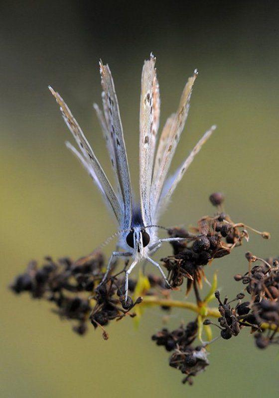 Разбуди меня, бабочка - четыре крыла...photo preview