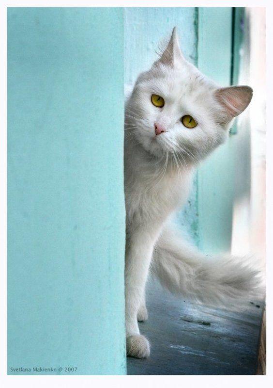 Обернусь я белой кошкойphoto preview