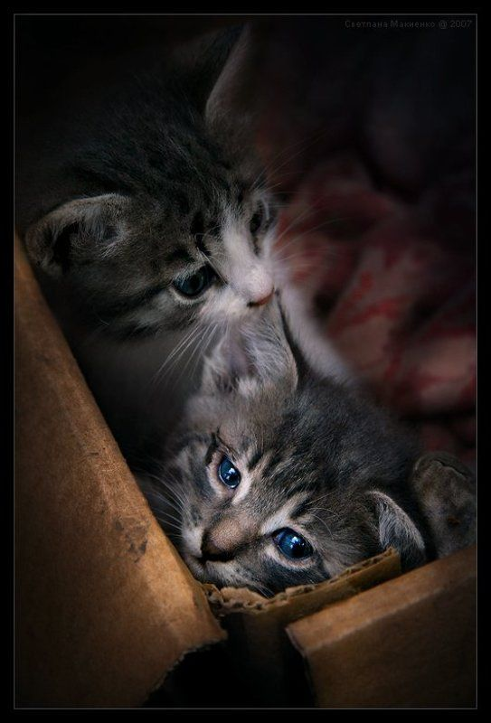 Забери меня, мама!photo preview