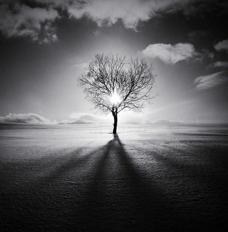 пейзаж, природа, зима В оковах дерева...photo preview