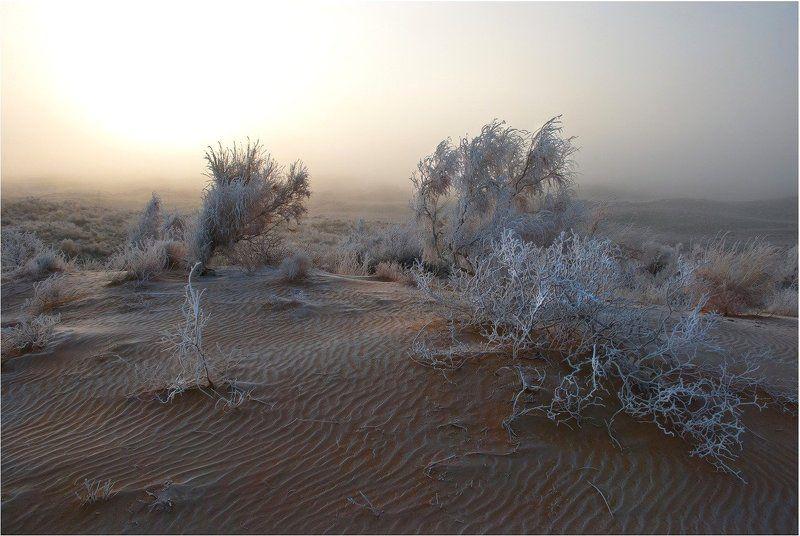 природа С добрым....утром...photo preview