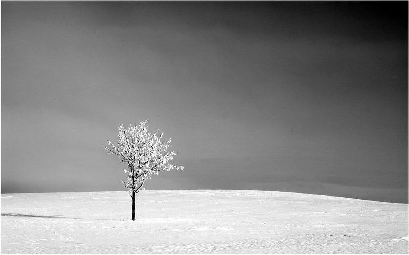 lithuania,winter,tree,field Pасцвела белоснежная грушаphoto preview