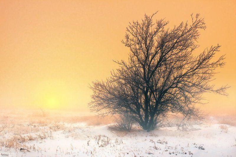 утро, зима, winter, morning, туман Зимнее утроphoto preview