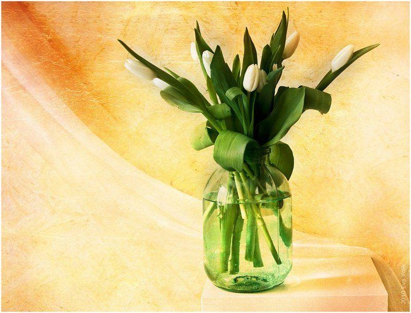 банка, букет, белые, тюльпаны Simplephoto preview