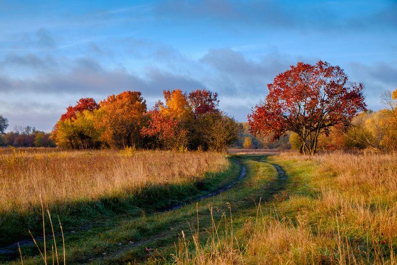 осень,пейзаж,природа,октябрь,дорога,небо Дорога в золотую осеньphoto preview