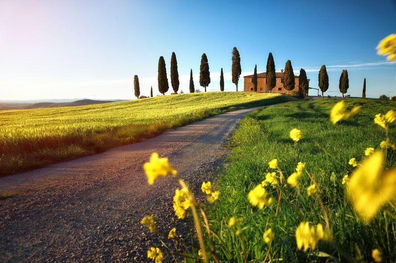 тоскана, италия, вилла, поле, пейзаж, воробей, пьенца Меж зелёной пшеницы...photo preview