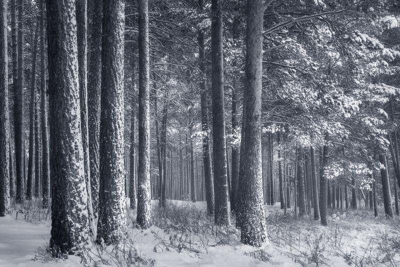 лес, зима, снег, деревья в снегу Седой лесphoto preview