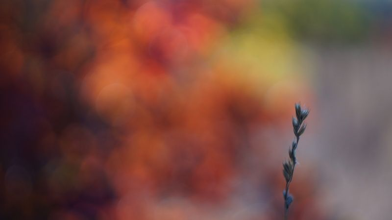 Краски осениphoto preview