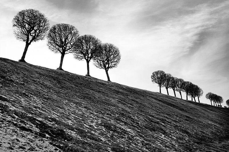 петергоф, зима, ч/б, 5d, деревья Петергофский паркphoto preview