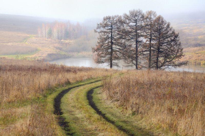 осень, ноябрь, поле, посадки, туман, 5d, 100-300mm Ноябрьское утроphoto preview