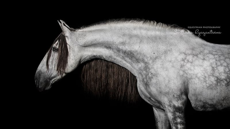 horse, лошадь, лошади, details, portrait Испанецphoto preview