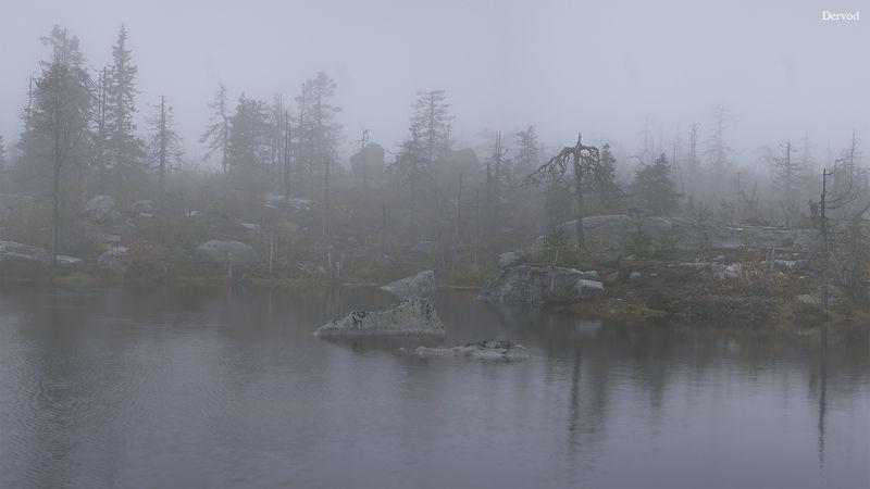 #dervod #drevo Вершина горы Воттоваара.photo preview