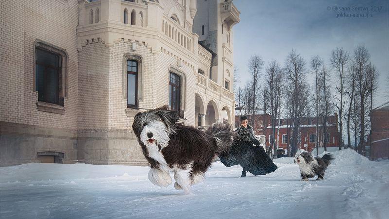 девушка, замок, собака, бег, движение, спорт, ветер, зима, снег, наперегонки когда Шансо был маленьким...photo preview
