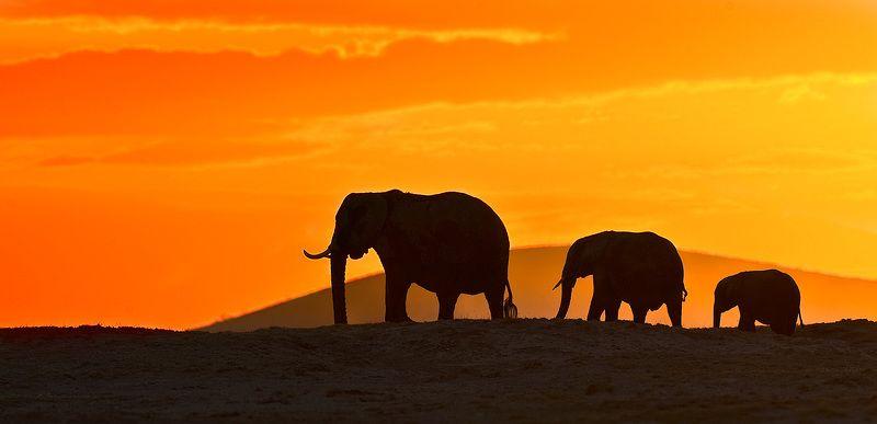 слоны Слоны на закатеphoto preview