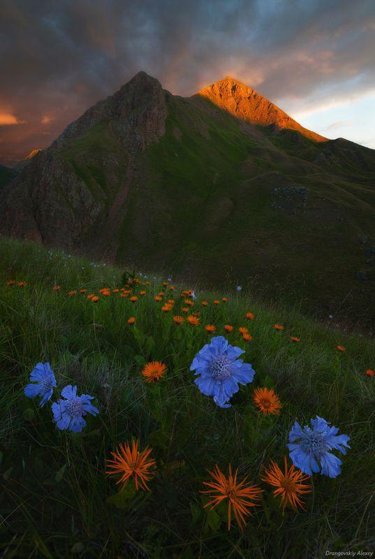 очарование «альпики» Приэльбрусьяphoto preview