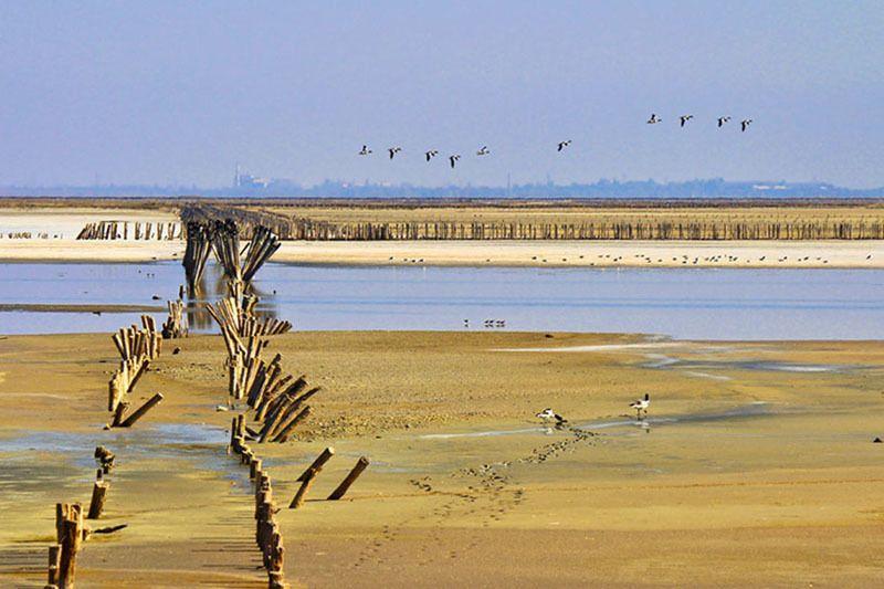 утки,озеро,лето,столбы.соленое озеро Летят утки....photo preview