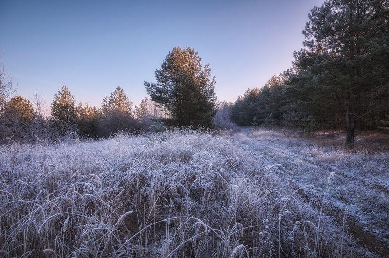россия, подмосковье, утро, мороз, иней, небо, трава, деревья, свет Первая сединаphoto preview
