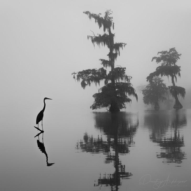спустился туман на болота, цапля уныло стоит, уж скоро декабрьphoto preview