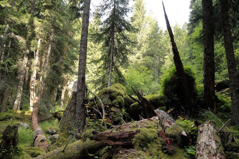 лес, теберда, тебердинский, заповедник, домбай Тебердинский заповедникphoto preview