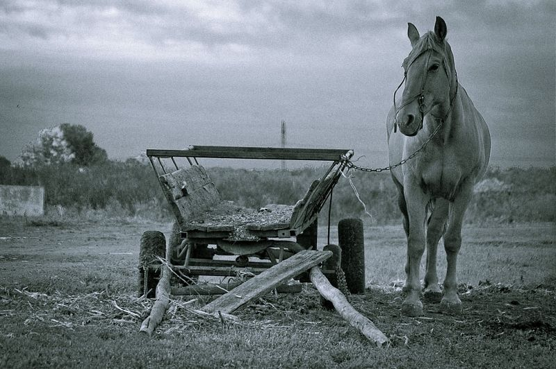 животные,лошадь,лошадка,утро,природа,ч/б,черно-белое,фото, Ожиданиеphoto preview
