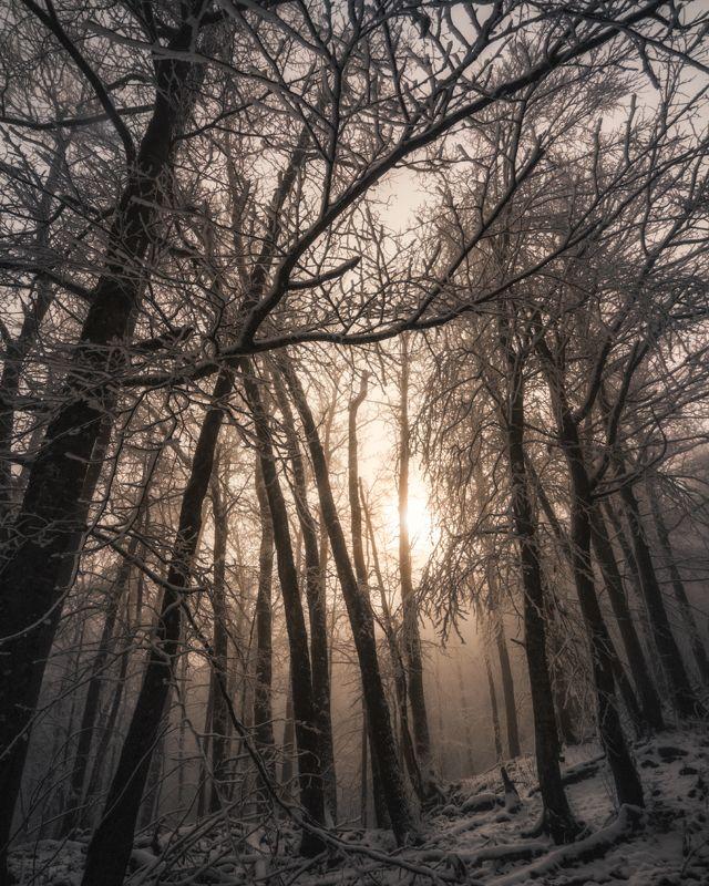 горы, снег, лес, деревья, осень, зима, солнце, свет, лучи, nikon, d7000 Одним утромphoto preview