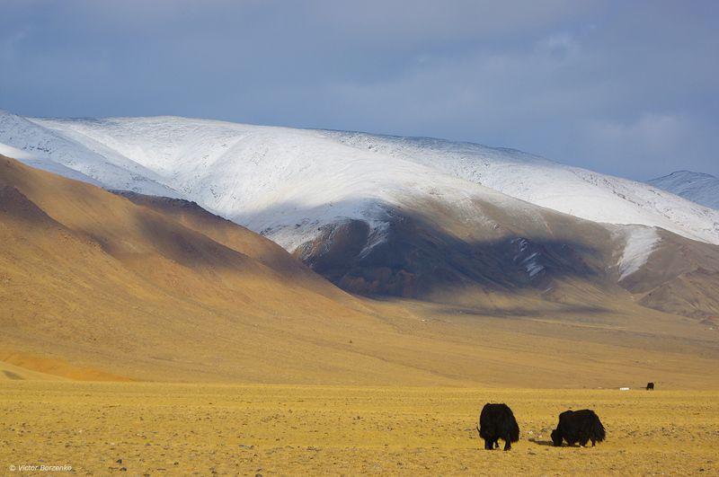 На просторах Монгольского Алтаяphoto preview