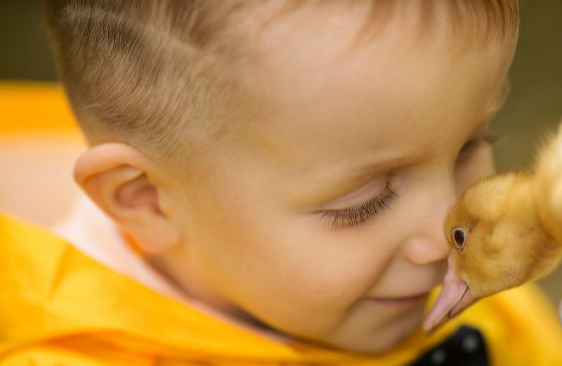Ребенок, мальчик, утенок, нежность photo preview