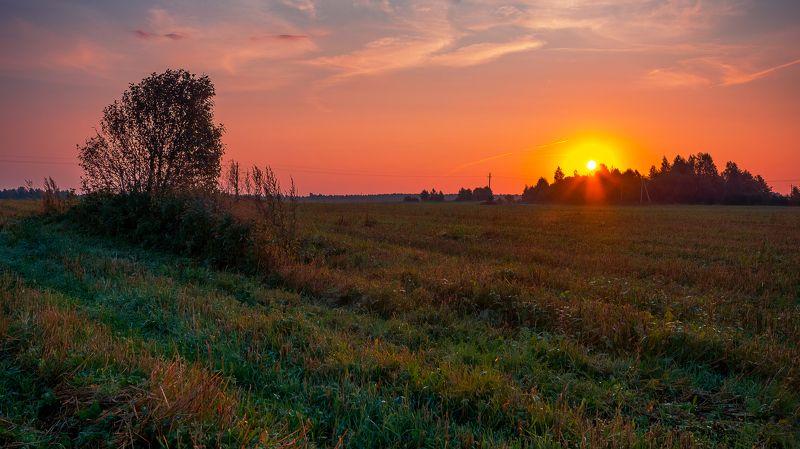 рассвет, поле, дерево, роса, солнце, небо, деревня Дыхание осеннего рассветаphoto preview