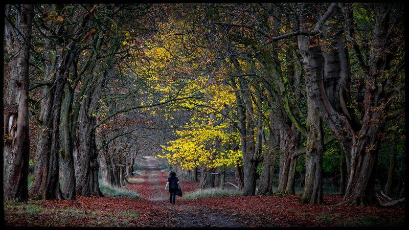 лес, осень,ходить Осень в моем районеphoto preview
