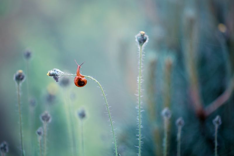 snail,macro,nature,beautiful,wild,bokeh,snails,fairy,faerie Snailphoto preview