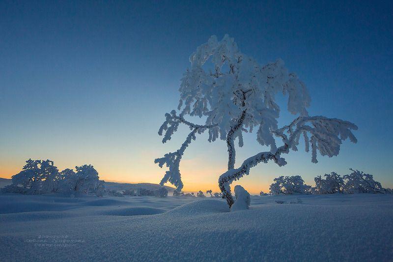 кольский п-ов, пейзаж, природа, зима, иней ***photo preview