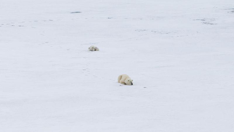 #фотографАндреевАндрей #зфи #арктика #медведи photo preview
