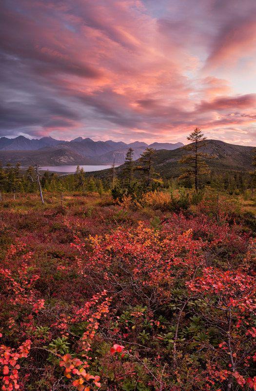 закат, осень, карликовая березка, горы, озеро, красный, облака, колыма, путешествия, панорама Красный закатphoto preview