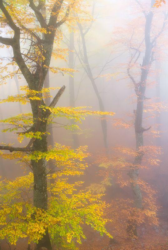 крым, туман, деревья, осень, fog, trees, autumn photo preview