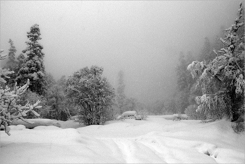 кчр, алибек, зима, лес, снег Алибекphoto preview