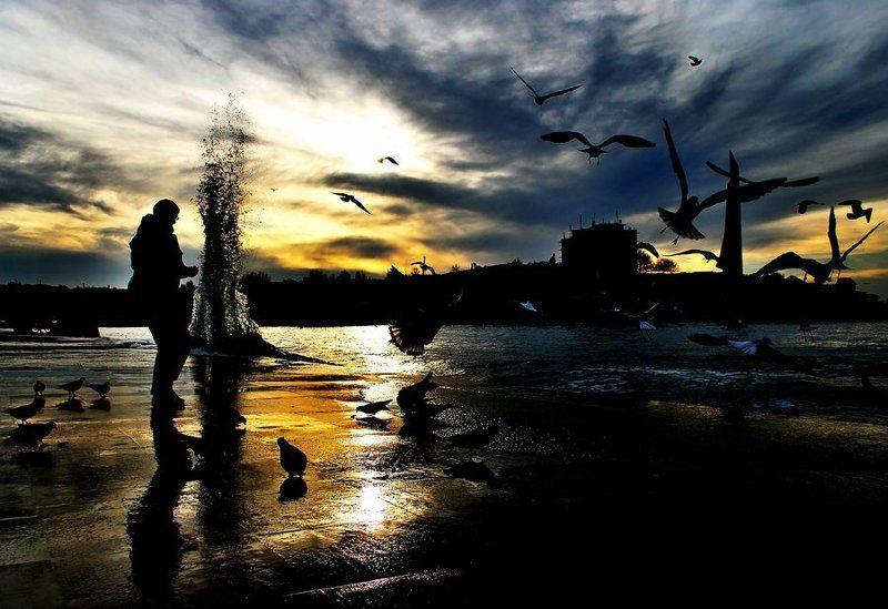 птицы, кормление птиц Кормление птицphoto preview