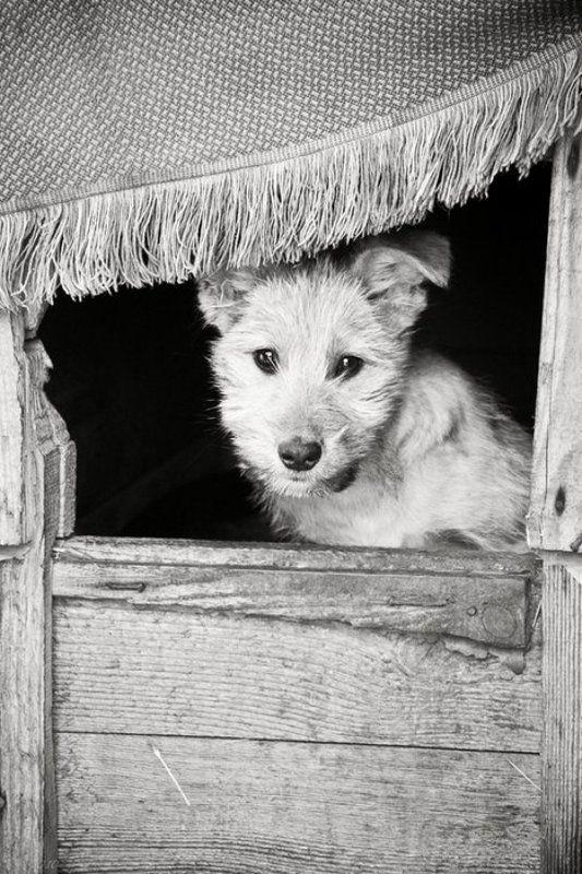 одинокая, собака, молча, смотрит, на, тебя ***photo preview