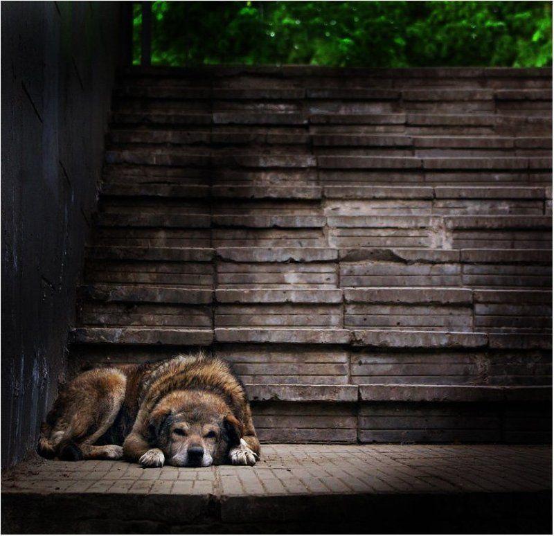 братья меньшие, домашние животные, собаки Ничейphoto preview
