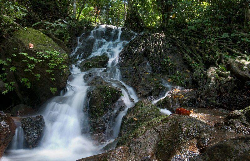 водопад Водопад в джунгляхphoto preview