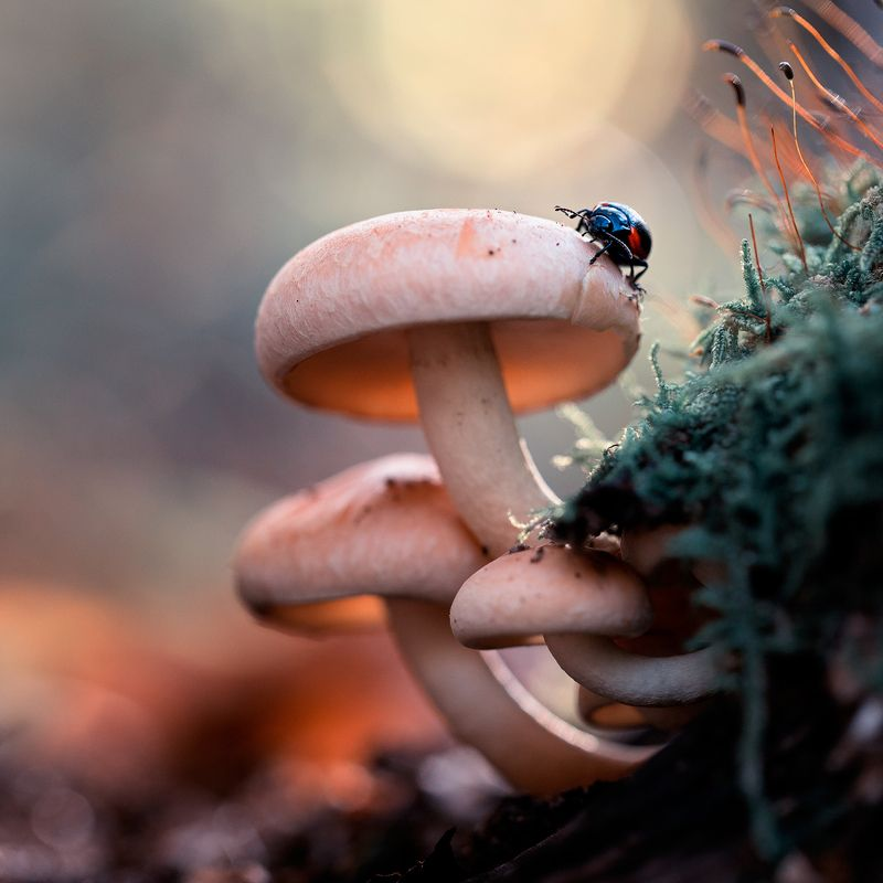 mushrooms,mushroom,spores,nature,forest,wild,fairy,beautiful,insects,insect, Mushroomsphoto preview