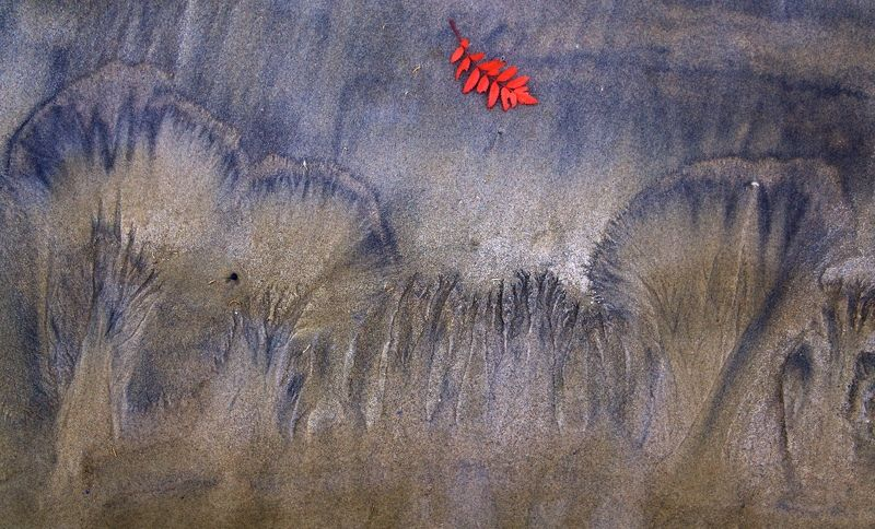 песок, абстракция, фактура шумел осенний лесphoto preview